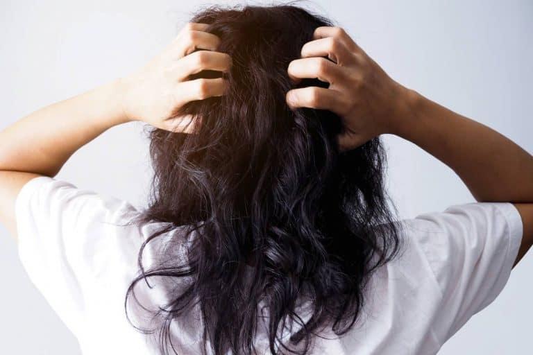 oily scalp dry hair